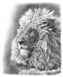 LionPencilDrawing