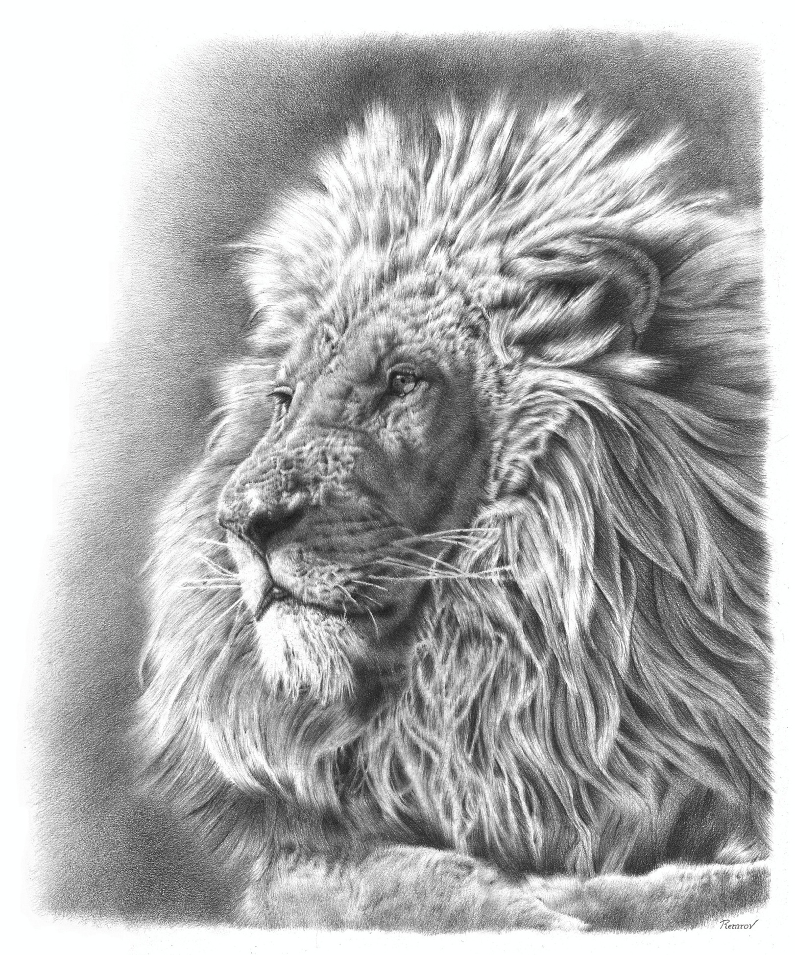 Lion Pencil Drawing by Remrov